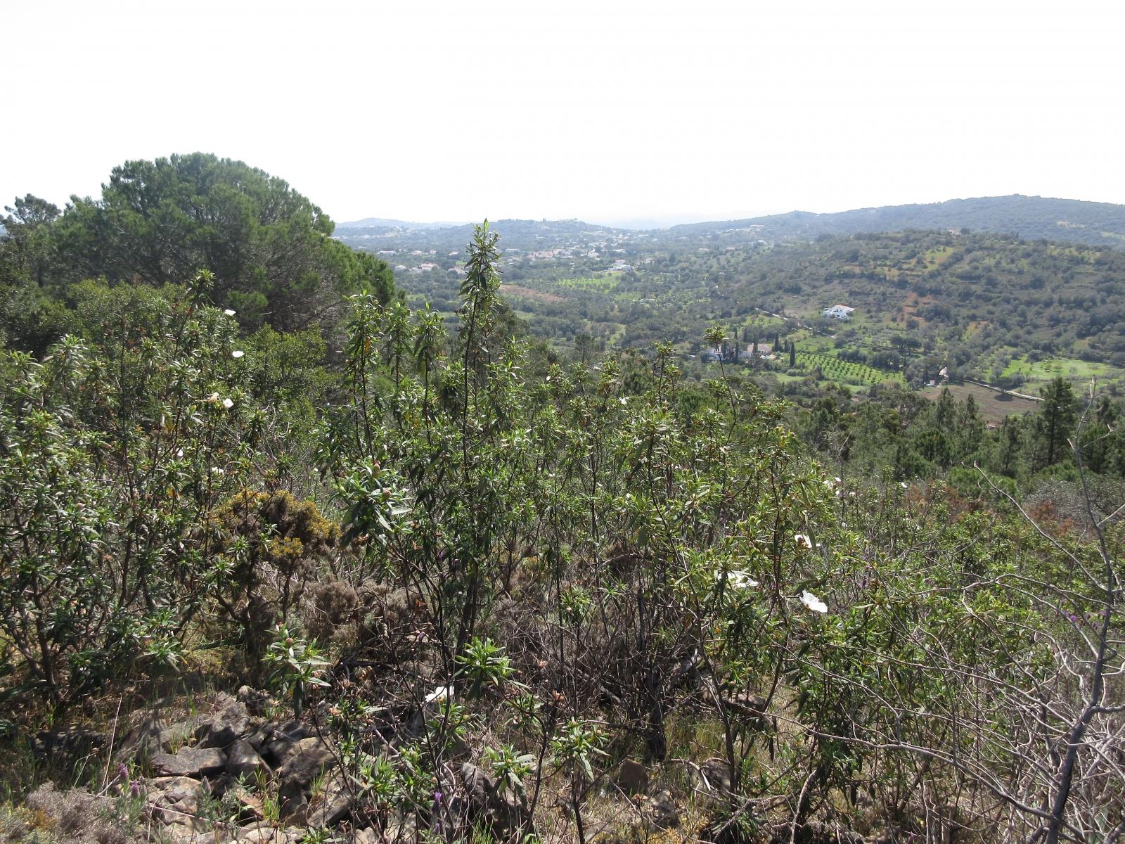 udsigt fra cerro d'alportel